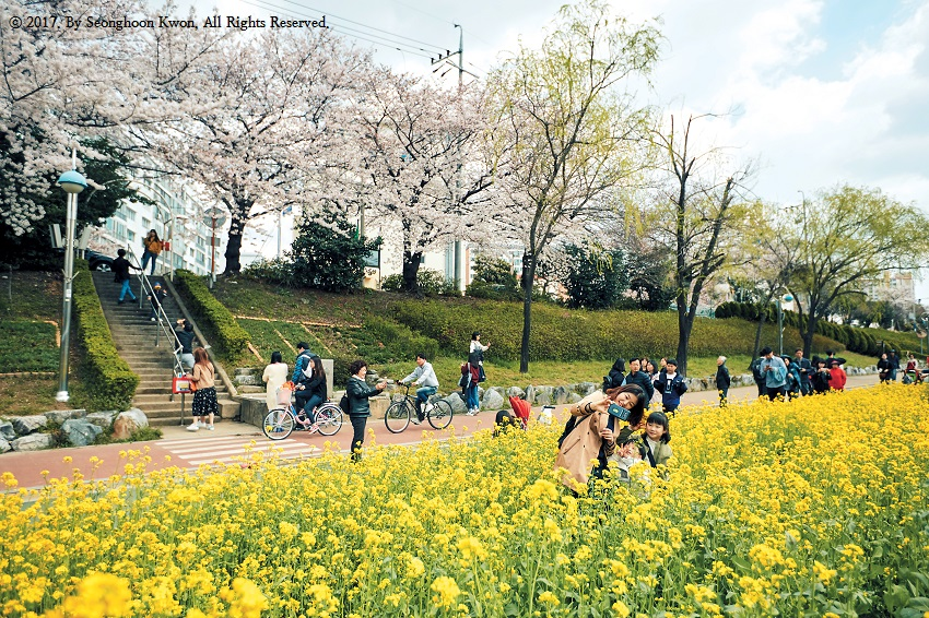 Oncheoncheon has got it going on: the stream of your dreams
