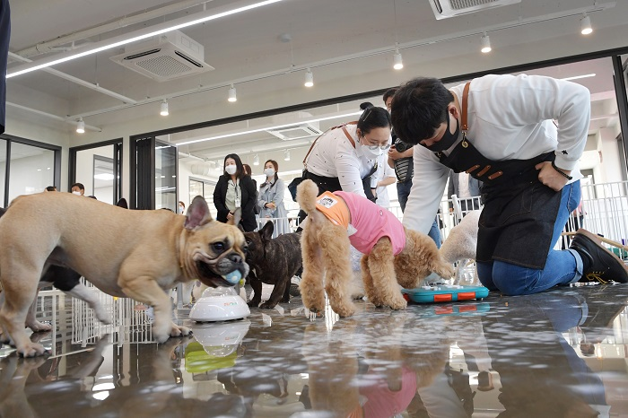 Busan good home for pets, owners