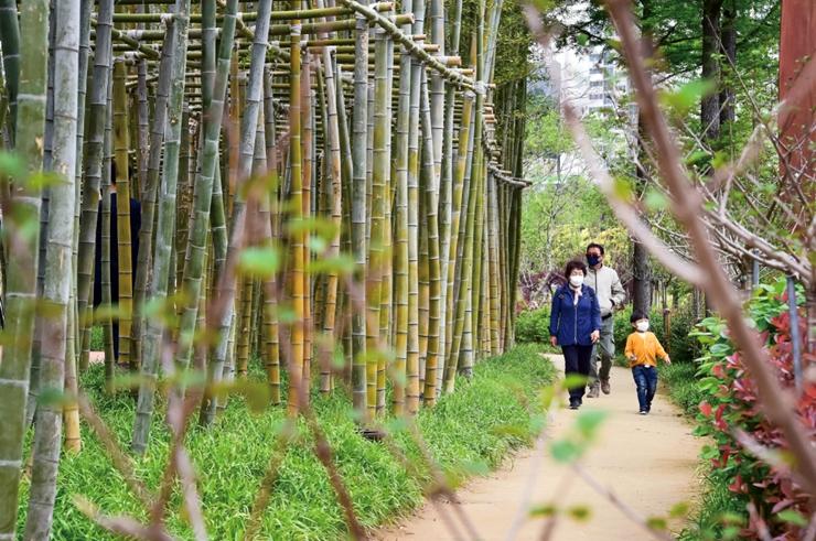 在绿色森林中纾解新型冠状病毒带来的疲劳吧!