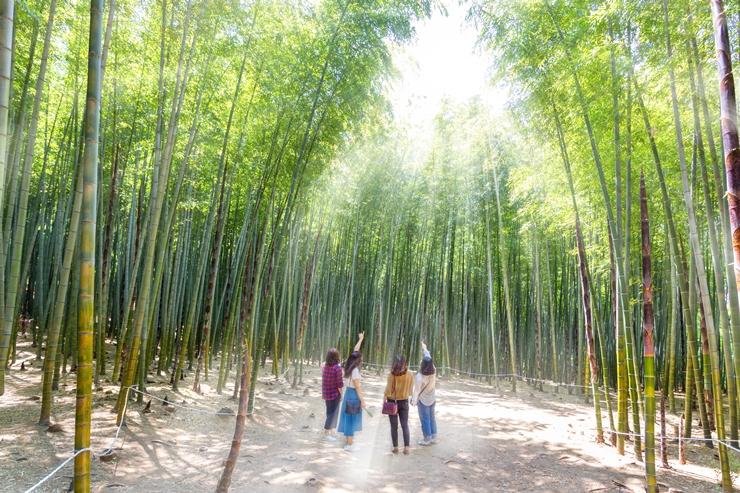 イユル、ホンシムが心を通わせた竹林が釜山に