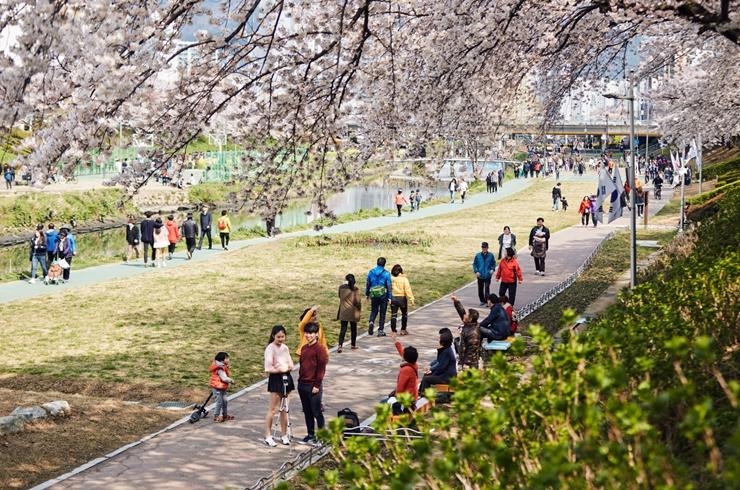 春天樱花树下, 我们又会留下美好的回忆吧