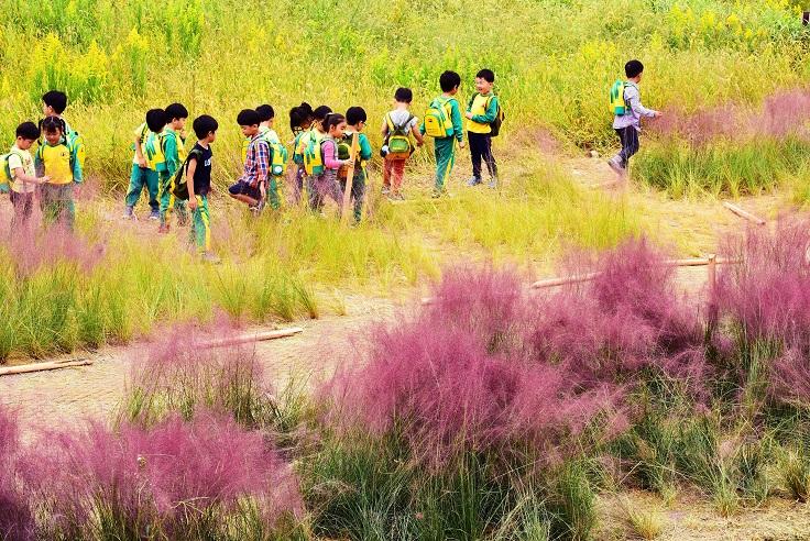낙동강생태공원 사진공모전(대저생태공원)  입선 수상작 (핑크뮬리 현장학습) 사진1